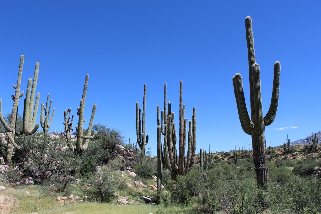 Cactus Gang surrender